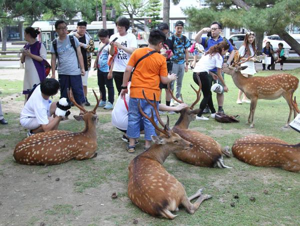 奈良公園の鹿と観光客(C)日刊ゲンダイ