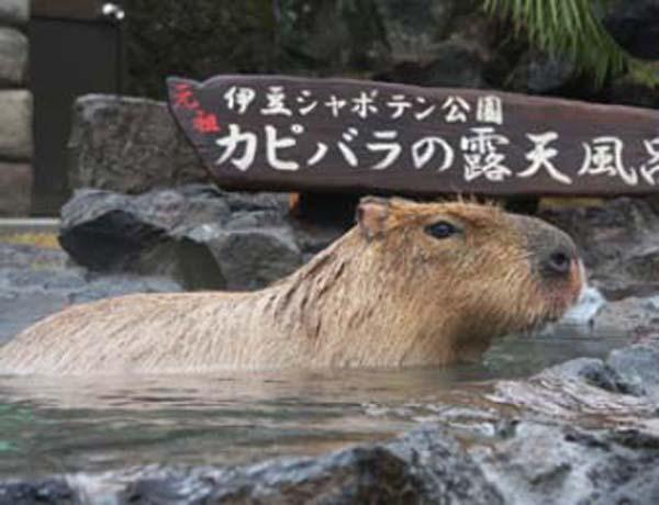 伊豆シャボテン動物公園(提供写真)