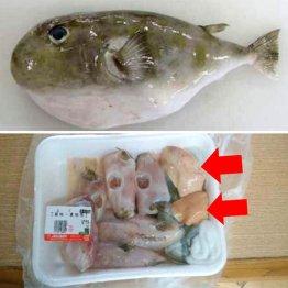 フグ肝販売 愛知のスーパーは「鮮魚が安い」と人気上々