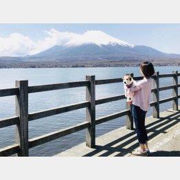 富士山が近い(C)日刊ゲンダイ