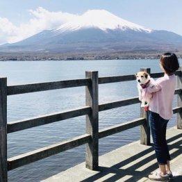 海外から人気の山中湖畔にはペットと遊べるスポットが充実