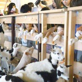 パソナグループ<上>東京駅前の本部に「大手町牧場」の奇策