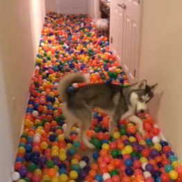 米トイザらスの閉店で…愛犬が「世界一幸せ」になったワケ