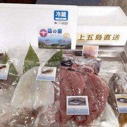 左からスルメイカ、アオリイカ、水イカ、コシナガマグロ、クロムツの4種で5500円