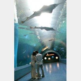 サメにくっついて生き延びる(C)日刊ゲンダイ