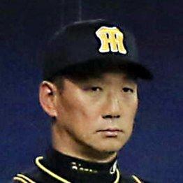 阪神・金本監督は現役時代と同じで一生懸命に過ぎる