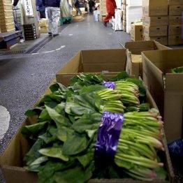"""""""ガラパゴス化""""する野菜 深緑色のホウレン草が危ない理由"""
