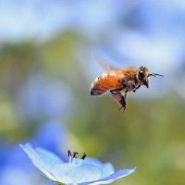 """日本の農家が好んで使う """"ミツバチ大量死""""農薬の危険性"""