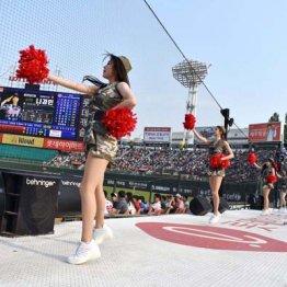 韓国第2の都市・釜山で楽しむプロ野球と辛ウマグルメの旅