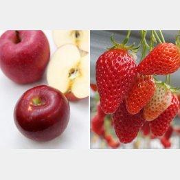 果物は野菜より農薬が多く検出される(C)日刊ゲンダイ