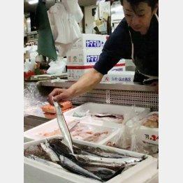 北海道釧路市の市場に並ぶ初物のサンマ(C)共同通信社