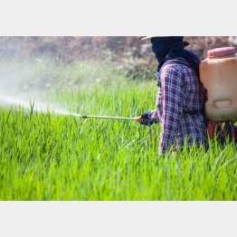 農薬の散布回数は地域で決められている(C)PIXTA