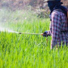 「減農薬栽培」のカラクリ…危ない薬を使うと回数が減る
