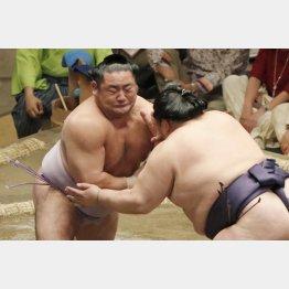 筋肉隆々(左が琴恵光)(C)日刊ゲンダイ