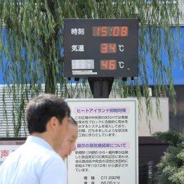 想定外の暑さに悲鳴(C)日刊ゲンダイ