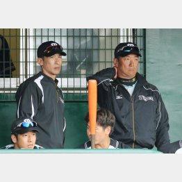 昨季までは一軍コーチを務めていた矢野二軍監督(C)日刊ゲンダイ