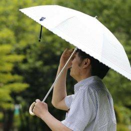 猛暑で増える「日傘男子」 デビューするならいくらで?