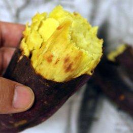 素材一本勝負の甘さ…ヒンヤリ焼き芋「冷やし師匠<下>」