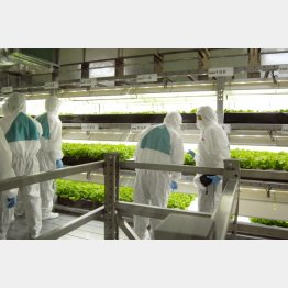 兵庫県養父市の「植物工場」(C)共同通信社