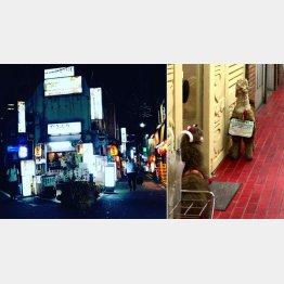 ひなびた路地の雑居ビルにアルパカのぬいぐるみを置くペルー料理店が(右)/(C)日刊ゲンダイ