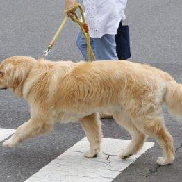 急成長する「アイペット」 犬や猫の保険で純増数がトップ