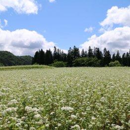 農業人口が激減…米どころ秋田は「ヘルシー米」を売る