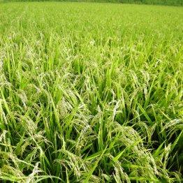 カネ・技術・農地確保 公的支援制度を利用すべし