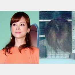 送検される吉澤ひとみ容疑者(右)(C)日刊ゲンダイ