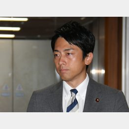 小泉進次郎氏(C)日刊ゲンダイ
