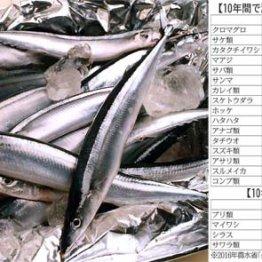 サケの産出額は10年で170億円ダウン 大衆魚の高級化が進む