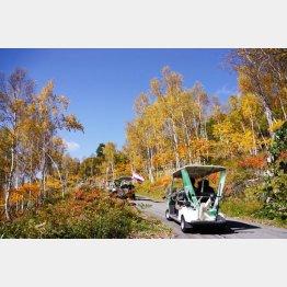 余ったゴルフカートを利用して八ケ岳の紅葉を楽しめる(提供写真)
