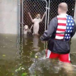 洪水で危機一髪!檻に閉じ込められた犬の救助動画が急拡散