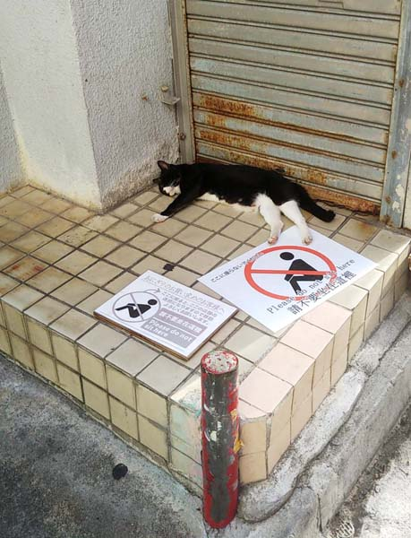 そこかしこに猫が(C)日刊ゲンダイ