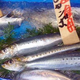 "EPA製剤""特需""を秘める「日本水産」 心疾患分野で可能性大"