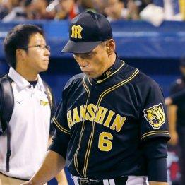 阪神17年ぶり最下位 金本続投と小幅改造に選手ドッチラケ