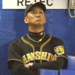 阪神金本監督には普通の新米監督に適用されない評価基準が