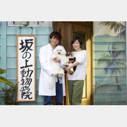 主演の相葉は獣医がハマリ役(C)テレビ朝日
