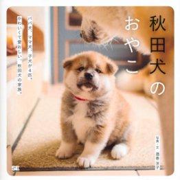 「秋田犬のおやこ」酒巻洋子写真・文