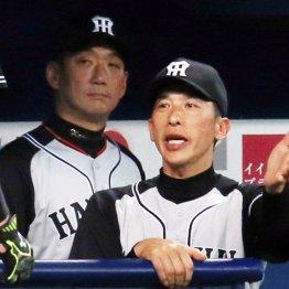監督解任を「金本野球の継承」で隠す阪神のお偉い方に問う