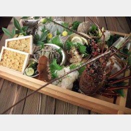 伊勢海老など、いろんな魚介類がのった舟盛り(特別料理)/(提供写真)