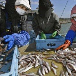 農水省 「漁業制度の大改革」は奥原正明前次官の置き土産