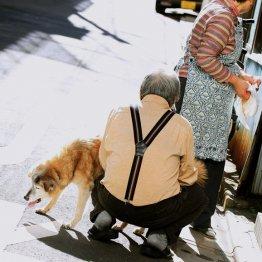 スタートまで2カ月 目玉の「配偶者居住権」は65歳が分岐点