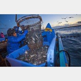 漁業関係者からは不安の声が(C)日刊ゲンダイ