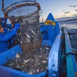 漁業関係者からは不安の声が