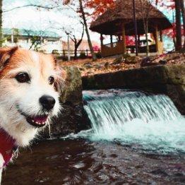 愛犬とのんびり過ごす八ヶ岳・清里の自然と星野リゾート