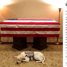 ジョージ・ブッシュ元大統領の介助犬 「最後の任務」完了