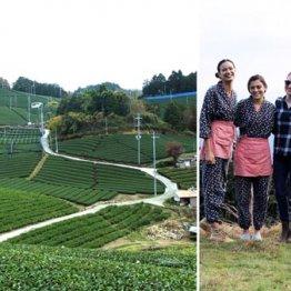 一面に広がる和束町の茶畑、外国人向けティーツアー(右)も人気