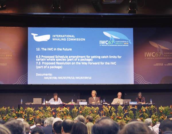 9月に行われたIWC総会(C)共同通信社