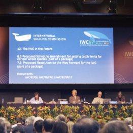 9月に行われたIWC総会