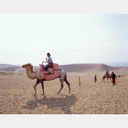 広大な砂丘に欧米人はビックリ(鳥取県提供)